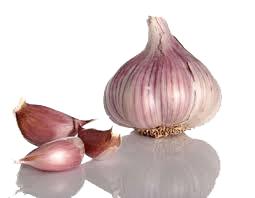 garlic ajo